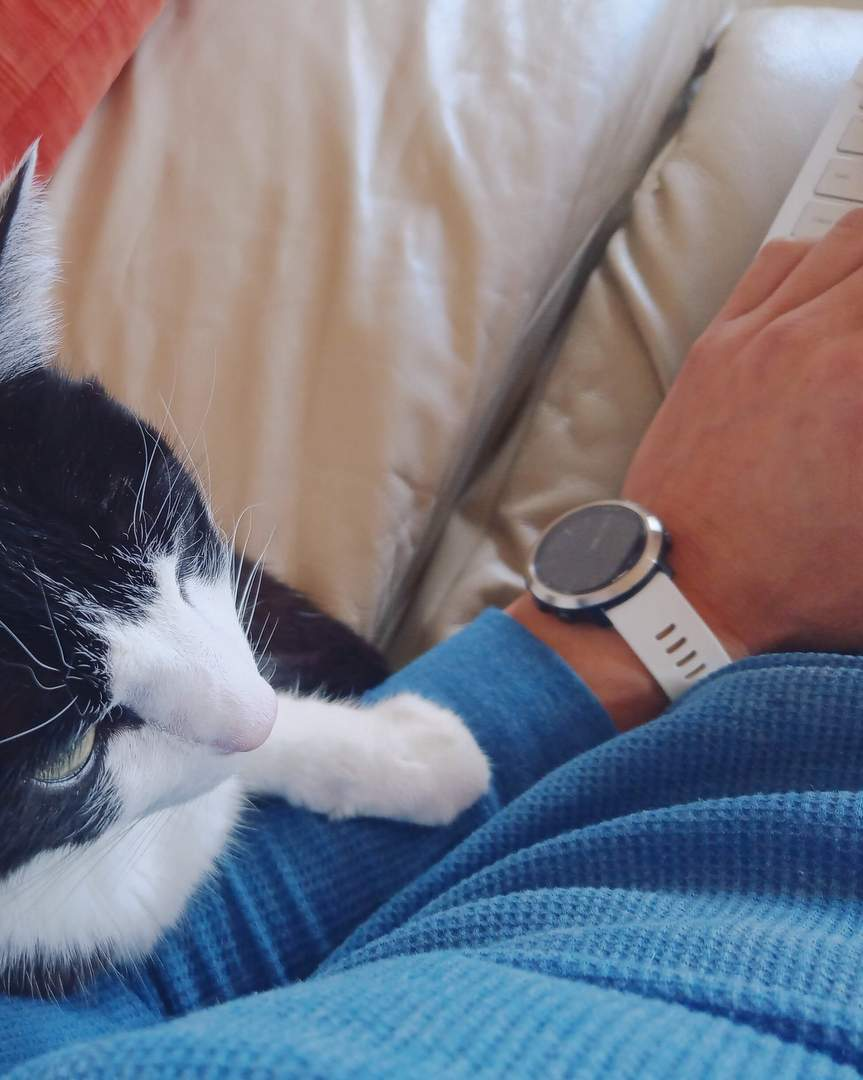 tuxedo cat next to arm typing on laptop