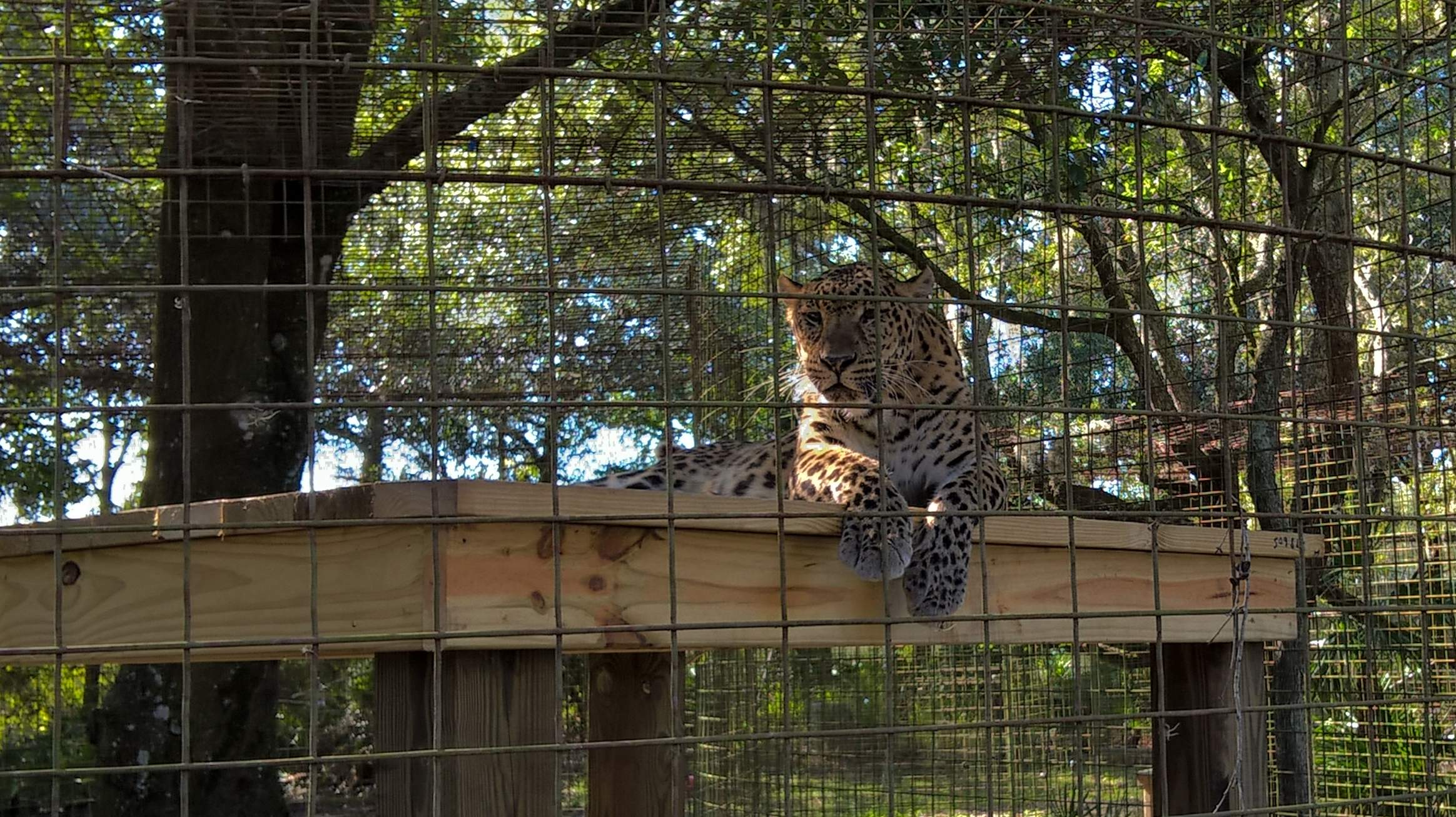 Featured photo for Big Cat Rescue