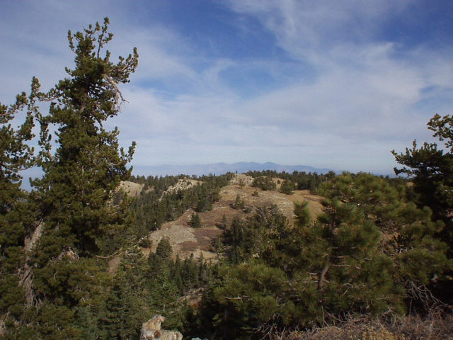 Featured photo for Mt. Pinos, CA