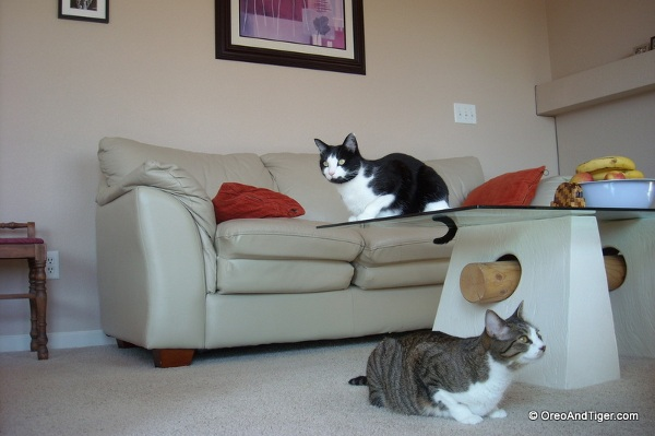 "My two funny kitties, Oreo and Tiger. Here they are doing a Shakespearean reenactment of ""Romeo & Juliet."""