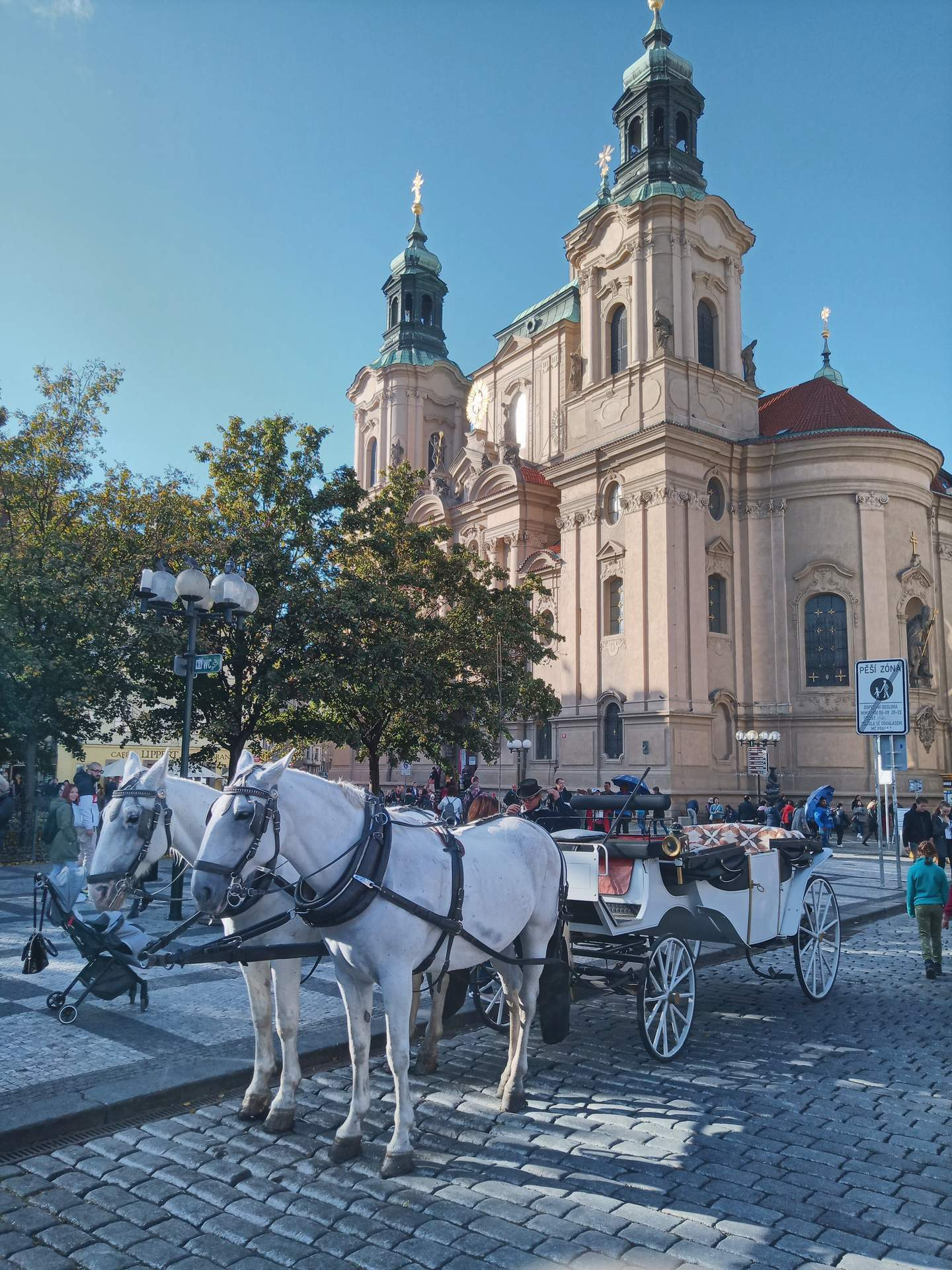 two white horses and carriage in Prague