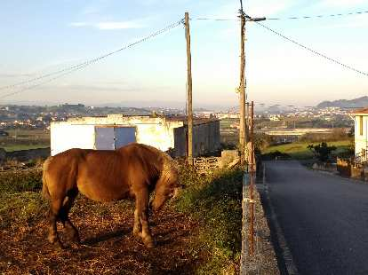 A horse bucking its head by the Camino de Santiago west of Santander, Spain.