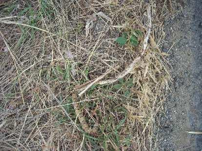 Dead snake.