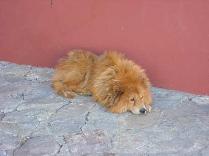 Another lazy dog, this one in Oaxaca.