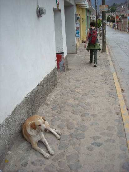This lazy but content dog hardly lifted an eyebrow as Sarah walked by in Teotitlan del Valle