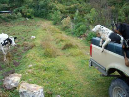 Cow watching as dogs cruised on by in Capulalpan de M̩ndez.