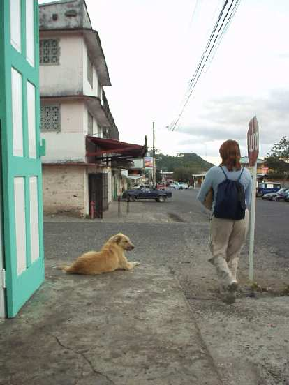 Unlike all the rest of the dogs in Boquete, this dog actually barked.
