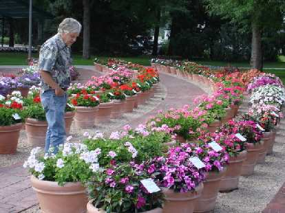 Tim at Colorado State University's Annual Flower Trial Garden.