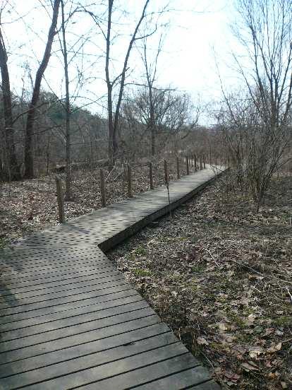 Boardwalk at the Beaver Lake Bird Sanctuary.