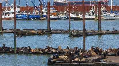 seals, boats, Columbia River, Astoria, Oregon