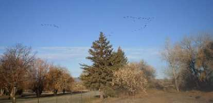 The next day we went for a run around my 'hood.  Here's a flock of birds flying over the golf course at the Fort Collins Country Club.