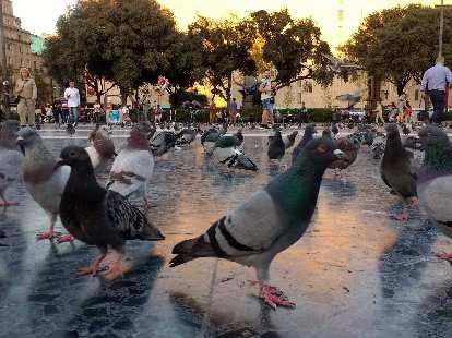 Lots of birds at Plaça de Catalunya in Barcelona, Spain.