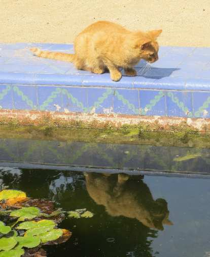 A cat and her reflection.