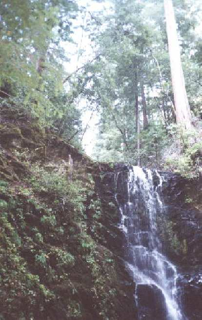 5 miles into our 14-mile hike, we reach the beautiful Berry Creek Falls.