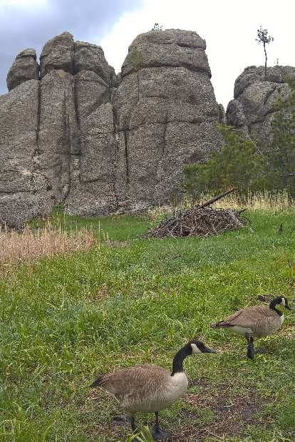 Two geese at Sylvan Lake.
