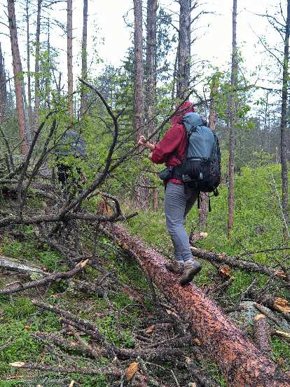 Saar walking over yet more logs on the Centennial Trail in the Black Elk Wilderness National Forest.