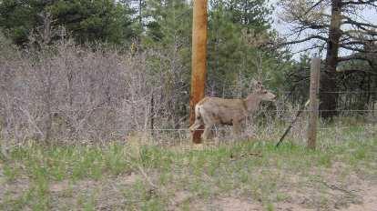 I saw lots of elk here.