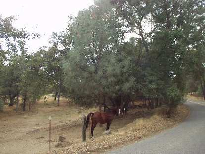 [Mile 127, 3:26 p.m.] A horse.  Other animals seen along the road were tarantulas and (non-dangerous) snakes!