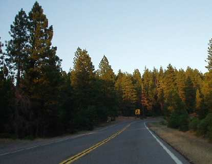 One of my best driving days was going towards Lassen Peak on CA-67, with the rays of a dawning sun intertwining with the green needles of towering pine trees.