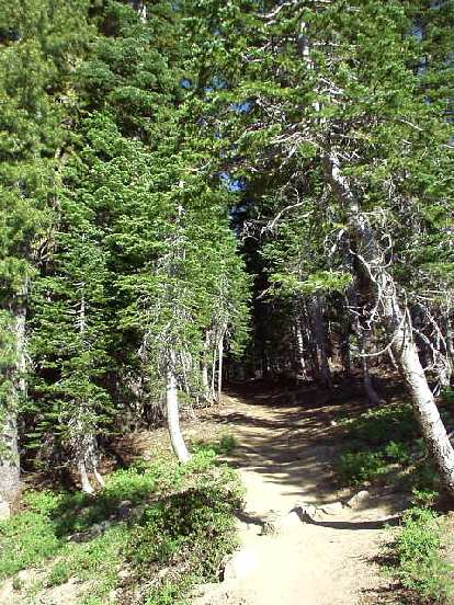 Until the very top (which is dominated by talus), there are a lot of pine trees which you walk through on a dusty trail.