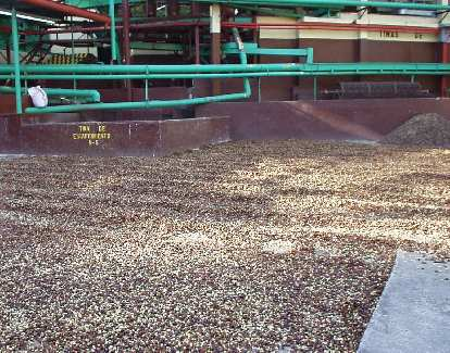 """""""Floater"""" beans are here.  They will ultimately make their way into (for example) Folgers or Nescaf̩ coffee."""