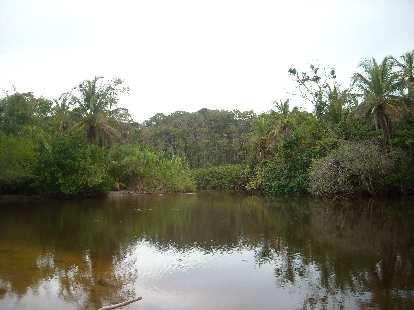 A pond in Cahuita National Park.