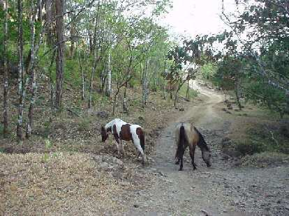 ... and horses.