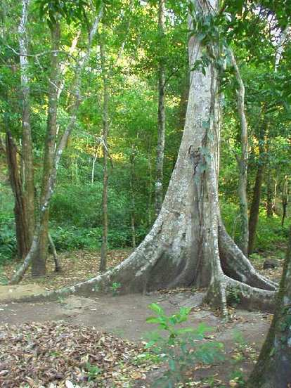 ... funky trees...