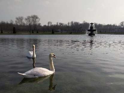 Swans on the lake outside the Château de Fontainbleau.