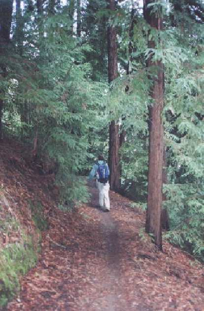 A very isolated patch of redwoods!