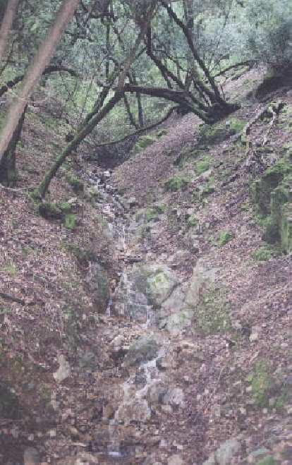 Mini water fall among mossy trees.