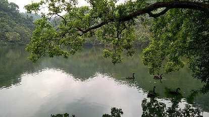 Ducks on a lake near the Cihu Mausoleum.