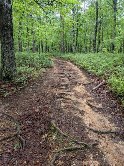 Even wider trails of the Conquer the Cove Trail Marathon were plenty technical with lots of roots and rocks to trip on.