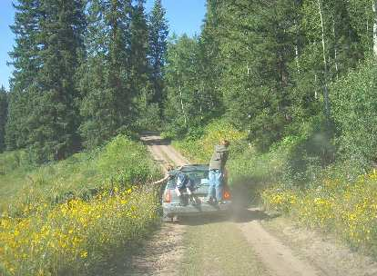 Through the wildflowers on the way out.