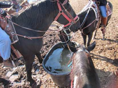 The horses were thirsty after the 90-minute tour.