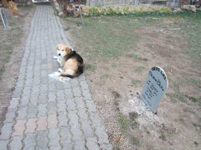 Dog by the makeshift graveyard at the Elkhorn Stables.