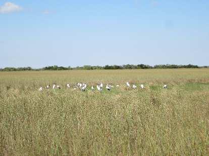 Birds in a meadow.
