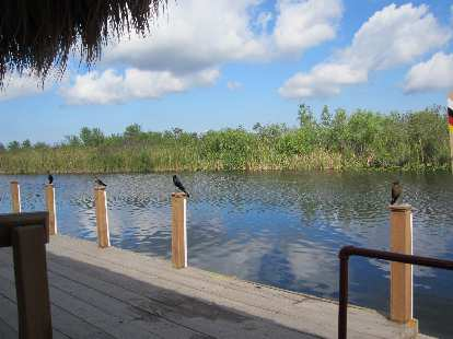Birds on columns at Buffalo Tiger's Airboat Tours.