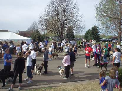 Have you ever seen so many dogs at a run?