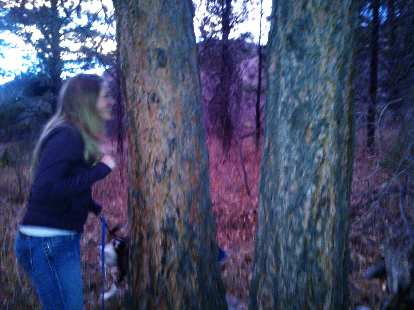 Noelle sniffing a tree.