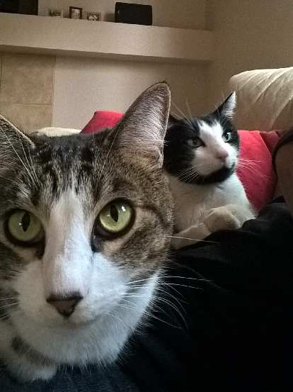Tiger and Oreo, tabby cat, black and white cat, red cushion