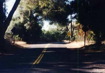 narrow empty shaded road