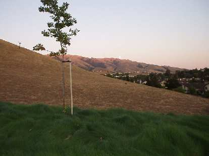 [Aug. 2002] The foothills from Paseo Padre, lit by a dimming sunset.