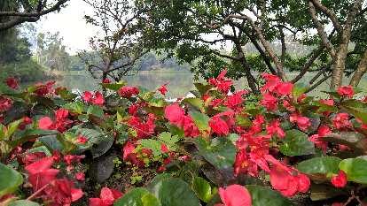 Flowers at Zuohai Park in Fuzhou, China.
