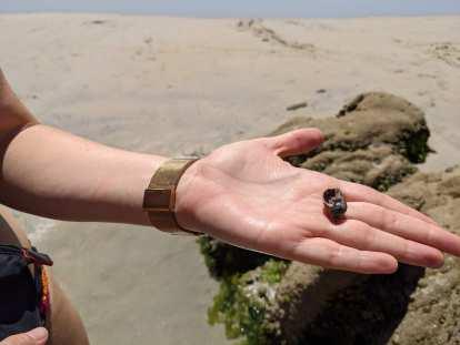 Andrea showing me a mollusk at a beach at A Lanzada.