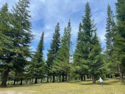 These sequoia trees at the Bosque de Colón - Sequoias Poio were from California.
