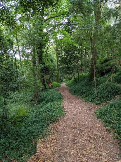 A footpath through the Bosque Encantado in Cangas.