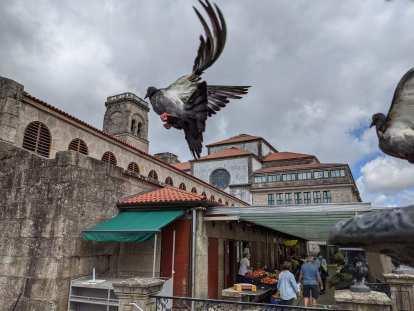 Birds flying near a market in the center of Santiago de Compostela.
