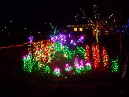 Lights shaped like flowers.