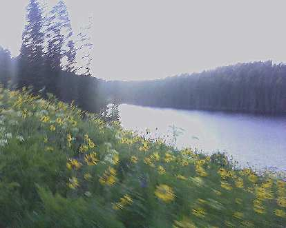 Sunflowers and lupine by a lake and sunrise in the Grand Mesa National Forest.